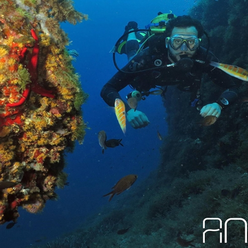 Diving in crystal clear waters in Ibiza