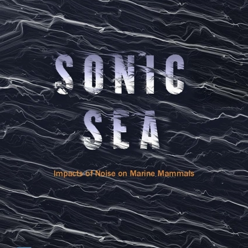 Sonic Sea. Projection of the documentary in Sant Antoni